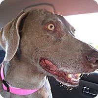 Adopt A Pet :: Hazel - Rolling Hills Estates, CA