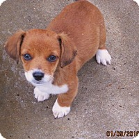Adopt A Pet :: Alibi - Williston Park, NY