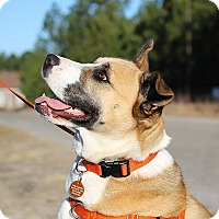 Adopt A Pet :: Cricket - Pinehurst, NC