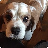 Adopt A Pet :: Toby - Sacramento, CA