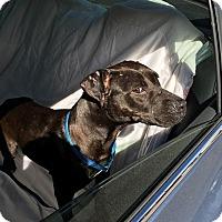 Adopt A Pet :: Fiona - Windermere, FL