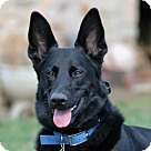 Adopt A Pet :: Simon 4171