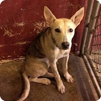 Adopt A Pet :: Arya - Aurora, IL