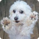 Adopt A Pet :: Jayjay
