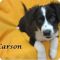 Adopt A Pet :: Carson - Bartonsville, PA