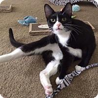 Adopt A Pet :: Bizou - Sherman Oaks, CA
