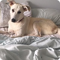 Adopt A Pet :: Francis - Enfield, CT