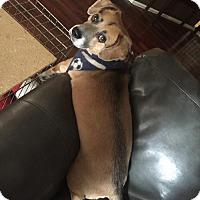 Adopt A Pet :: OSCAR - Chandler, AZ