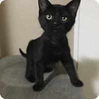 Adopt A Pet :: Sapphire - Huntley, IL