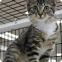 Adopt A Pet :: Bobby Socks  (AA) 4.20.16 - Orlando, FL