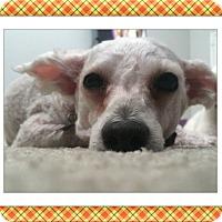 Adopt A Pet :: Hudson - FL - Tulsa, OK