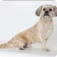 Adopt A Pet :: Cosmo - Monterey, CA