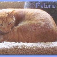 Adopt A Pet :: Petunia - Culpeper, VA
