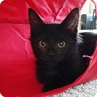 Adopt A Pet :: Gremlin - Fort Collins, CO