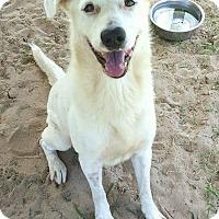 Adopt A Pet :: Casper - Jacksonville, FL