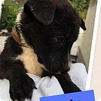 Adopt A Pet :: Tipster - Brattleboro, VT