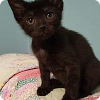 Adopt A Pet :: Kiara - Highland, IN