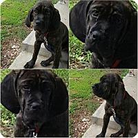 Adopt A Pet :: Gypsy - Southington, CT
