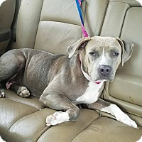 Adopt A Pet :: Jess - Orlando, FL