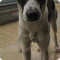 Adopt A Pet :: Leia - Von Ormy, TX