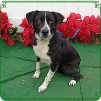 Adopt A Pet :: GOONIE 2 see also GOONIE 1 - Marietta, GA