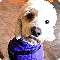 Adopt A Pet :: Matilda - San Diego, CA