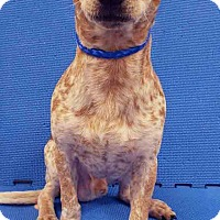 Adopt A Pet :: ADOPTED!!!   Moe - Channahon, IL