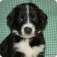 Adopt A Pet :: FAYE/ADOPTED - PRINCETON, KY