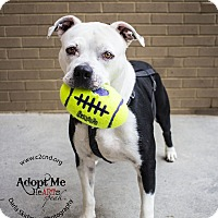 Adopt A Pet :: Haven - Mooresville, NC