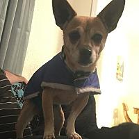Adopt A Pet :: Jojo - Radford, VA