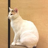 Adopt A Pet :: Coconut - Bulverde, TX