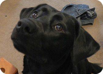 Rescue Dogs Woodstock Ontario