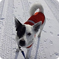Adopt A Pet :: Jack - PENDING, in Maine - kennebunkport, ME