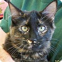 Adopt A Pet :: Harriet - Sacramento, CA