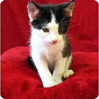 Adopt A Pet :: Sanford - Davis, CA