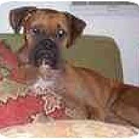 Adopt A Pet :: Britta - Albany, GA