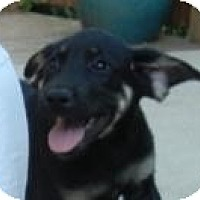 Adopt A Pet :: Rachael ADOPTED! - Antioch, IL