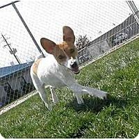 Adopt A Pet :: Sheena - Meridian, ID