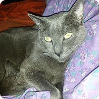 Adopt A Pet :: Tasha - Davis, CA