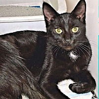 Adopt A Pet :: Breezy - Fredericksburg, VA