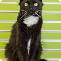 Adopt A Pet :: Charlie - Peacedale, RI