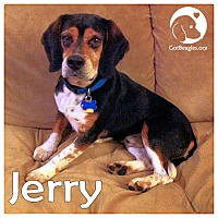 Adopt A Pet :: Jerry - Chicago, IL