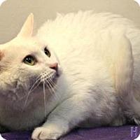 Adopt A Pet :: Casper - Sebastian, FL