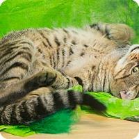 Adopt A Pet :: Winston - Elmwood Park, NJ