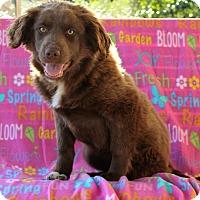 Adopt A Pet :: MacKenzie - Starkville, MS