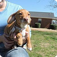 Adopt A Pet :: June - Berkeley Heights, NJ