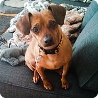 Adopt A Pet :: Geoffrey - Edmonton, AB