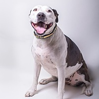 Adopt A Pet :: Princess Daisy - Los Angeles, CA
