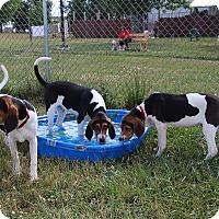 Adopt A Pet :: Theodore - Elyria, OH