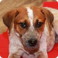 Adopt A Pet :: Boska - Rossville, TN